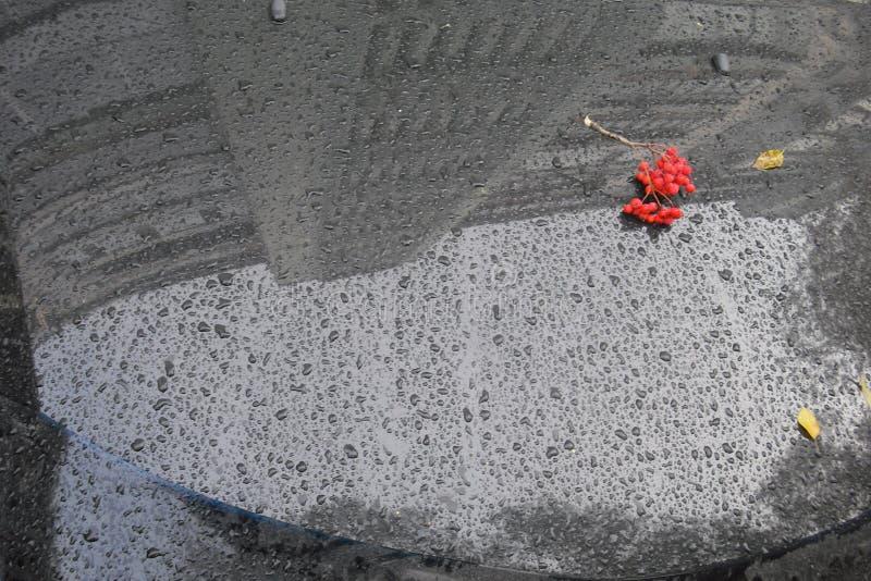Wiązka Rowan na mokrym od podeszczowej przedniej szyby obraz royalty free