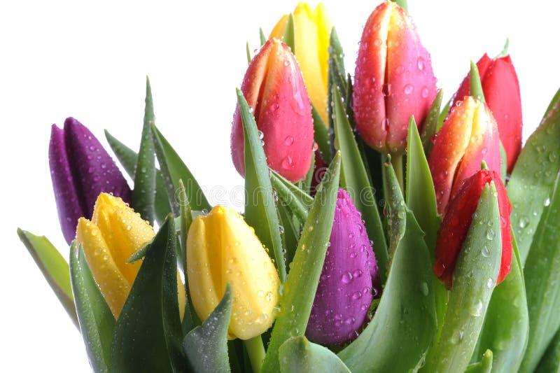 wiązka tulipany fotografia stock
