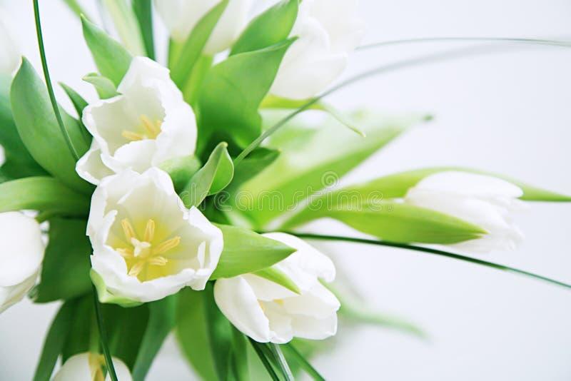wiązka tulipany biali fotografia royalty free
