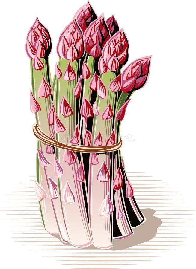 Wiązka wiążąca asparagus ilustracja wektor