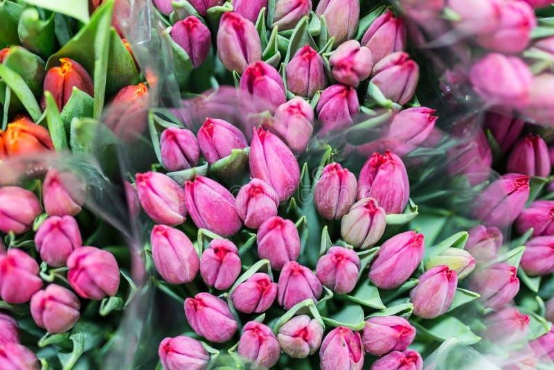 Wiązka wiele piękni świezi różowi tulipany Hurtowy i handel detaliczny kwiatu sklep Kwiatu rynek lub sklep Kwiaciarni usługowy po fotografia royalty free