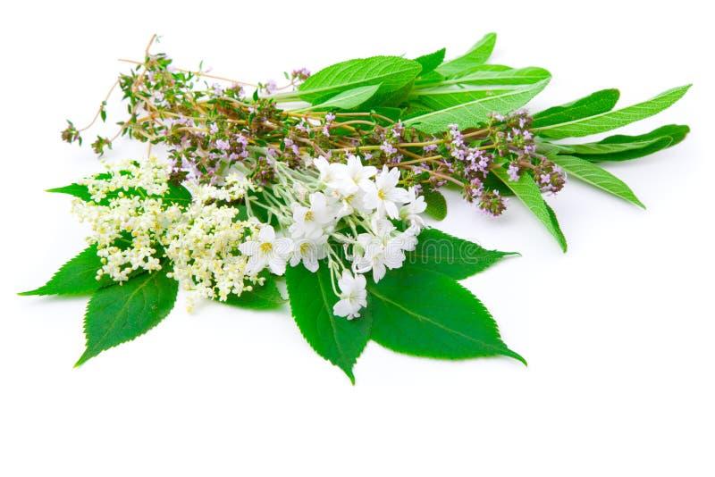 Wiązka ziele zdjęcie stock