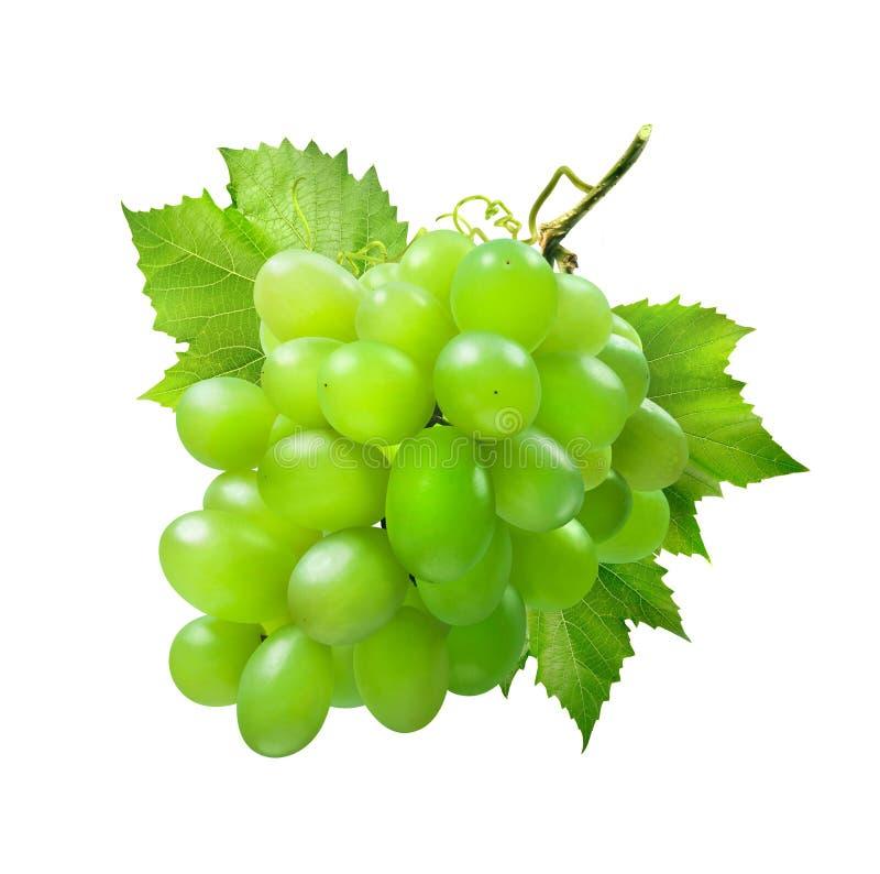 Wiązka zieleni winogrona z liśćmi odizolowywającymi na białym tle fotografia royalty free