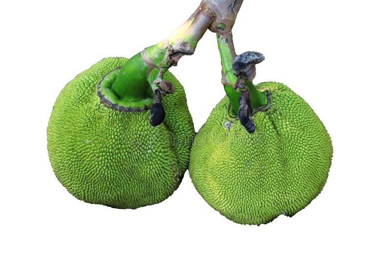 Wiązka zielona dźwigarki owoc odizolowywająca na białym tle fotografia stock