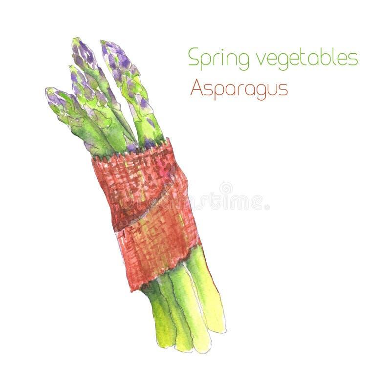 Wiązka zielony asparagus royalty ilustracja