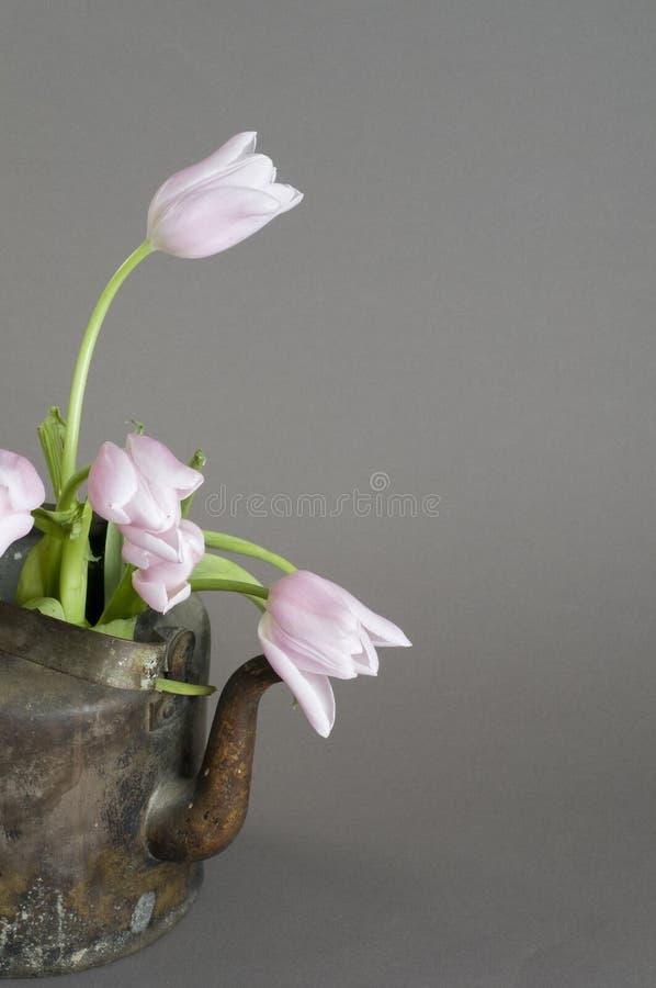 wiązki czajnika starzy różowi tulipany obrazy royalty free