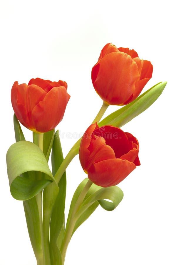 wiązki Easter tulipan zdjęcie stock