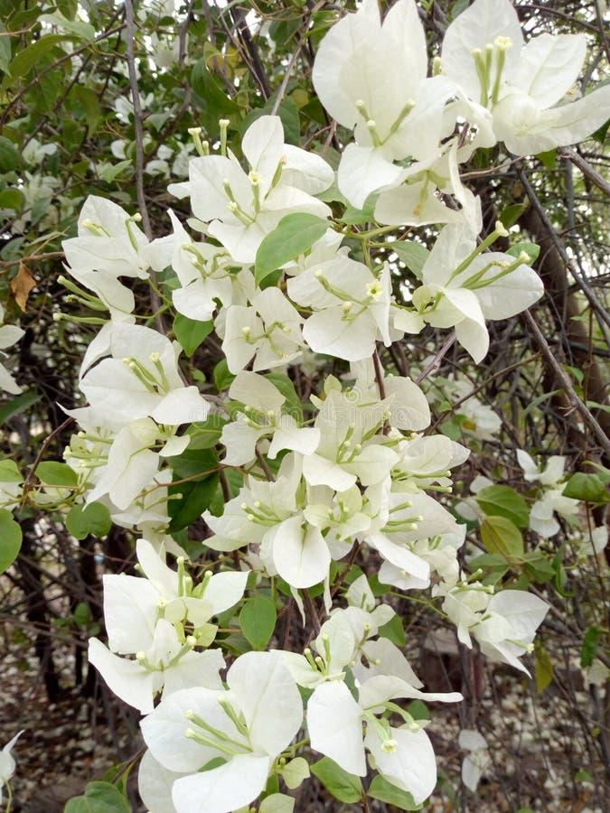 Wiązki piękny kwiat w bielu obraz royalty free