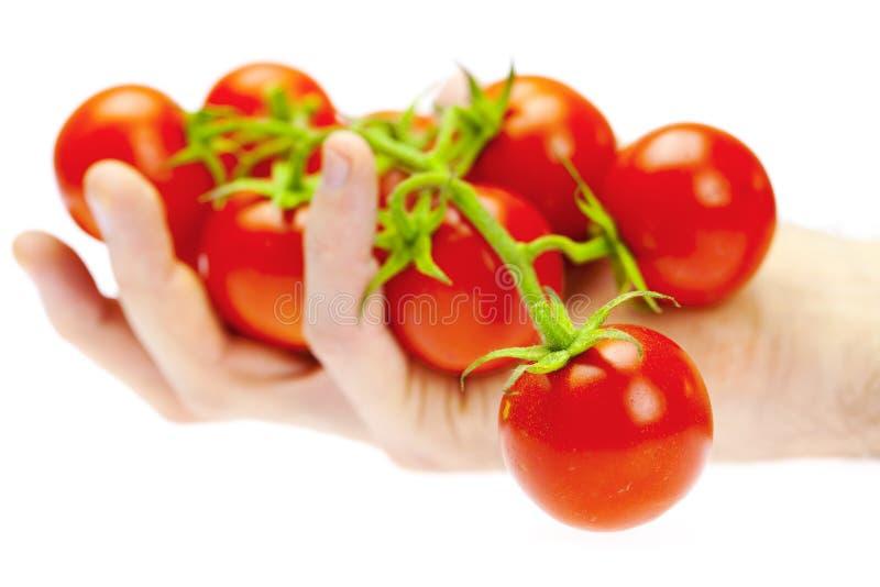 wiązki ręki mężczyzna pomidor twój obrazy royalty free