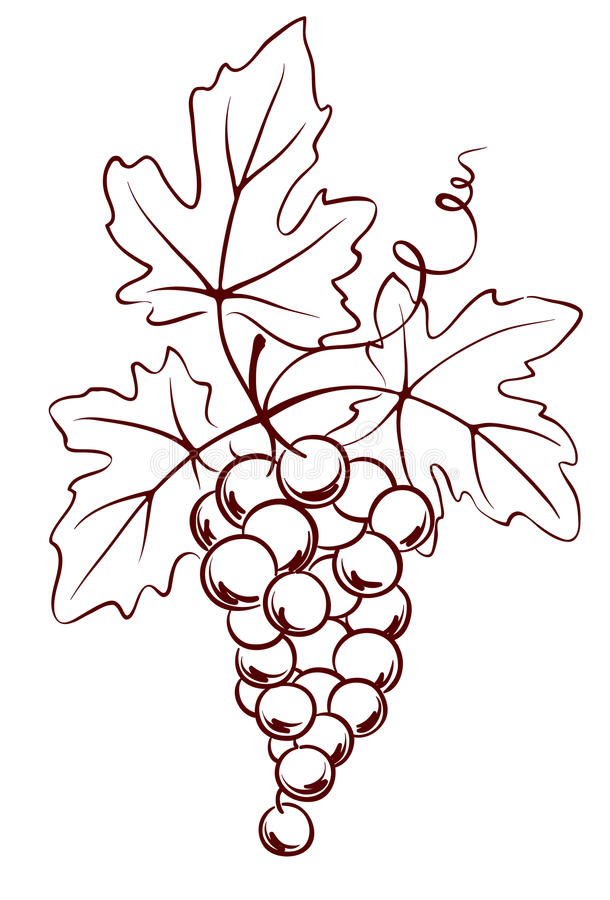 wiązki winogron liść royalty ilustracja