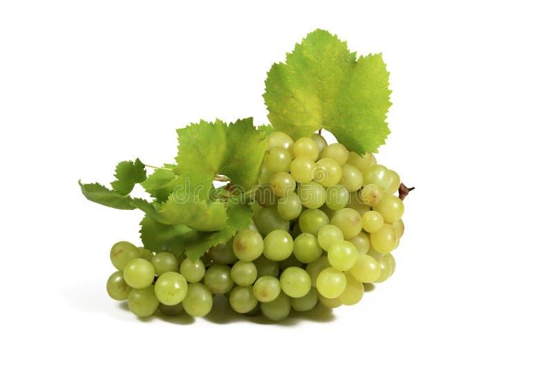wiązki winogron zieleń fotografia royalty free
