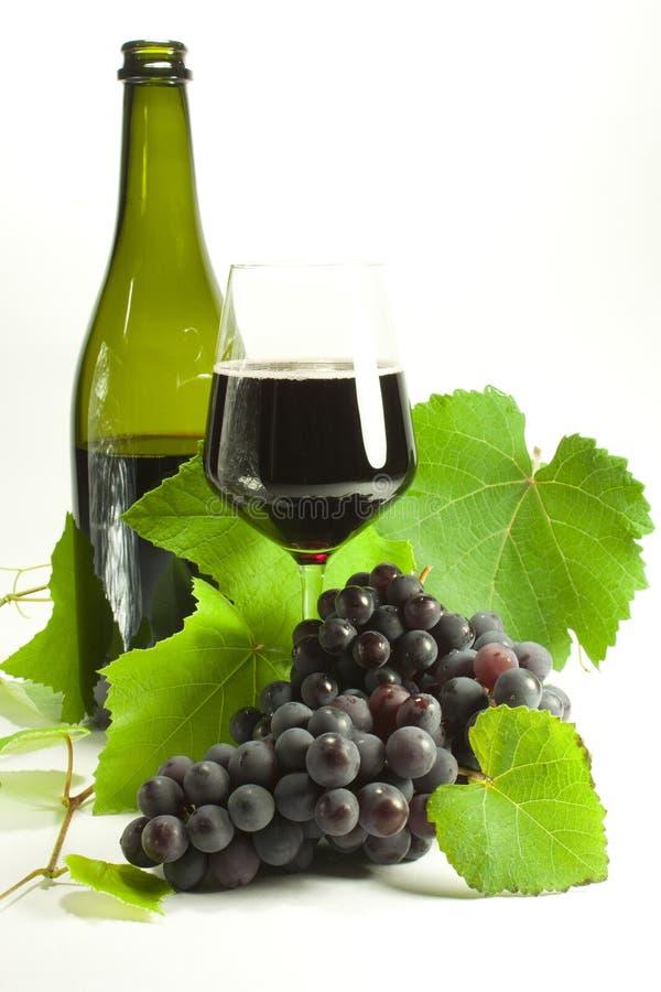 Wiązki winogrona obraz stock