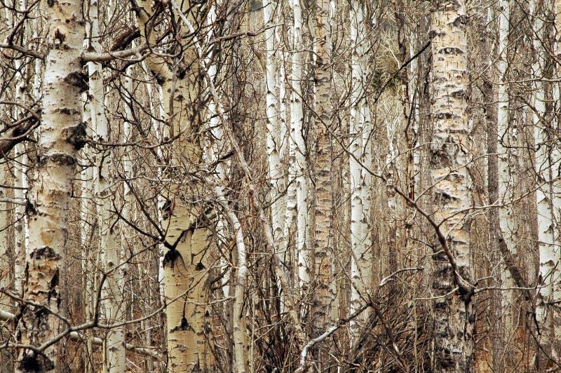 więcej to drzewo obraz royalty free