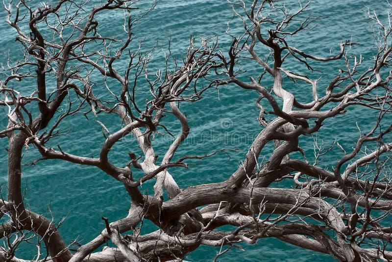 więdnący stary drzewo fotografia stock