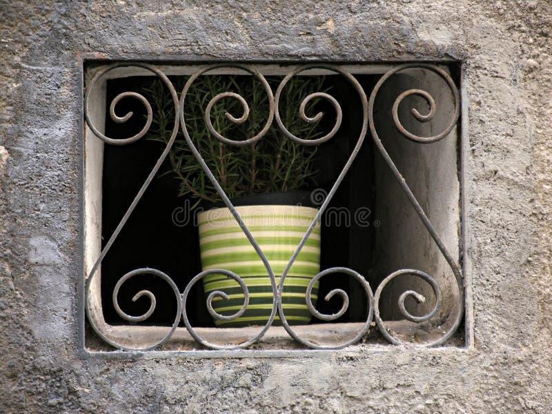 więziąca roślinnych zdjęcia stock