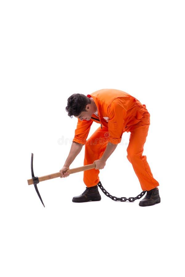 Więzień z cioską odizolowywającą na białym tle obrazy stock