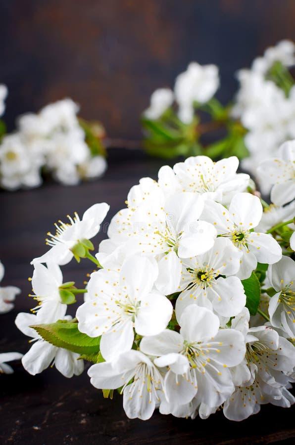 wiśnia kwitnie na ciemnym drewnianym tle fotografia stock