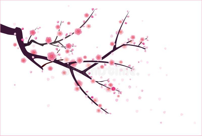 Wiśnia lub okwitnięcie śliwkowy wzór ilustracji