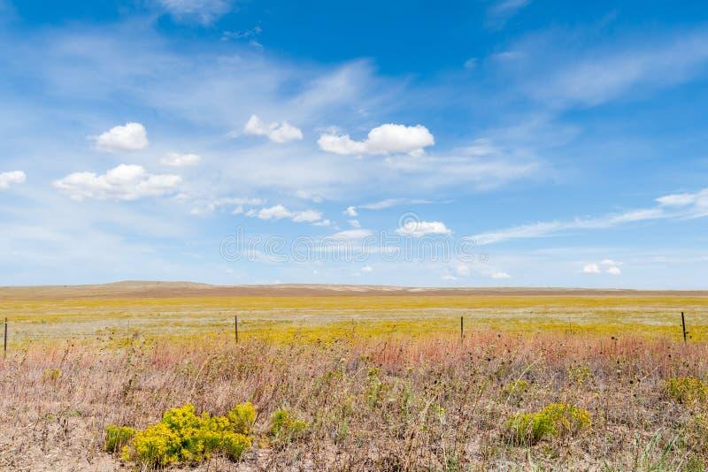 Wi del cielo azul de la flor del cepillo de conejo del amarillo del campo del campo de Arizona fotografía de archivo