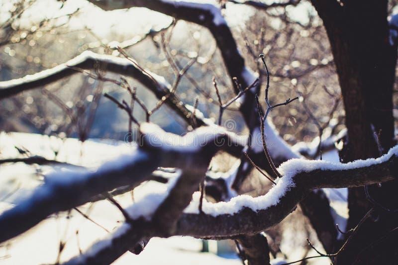 Więdnie Drzewa Z śniegiem Na Gałąź Bezpłatna Domena Publiczna Cc0 Obraz