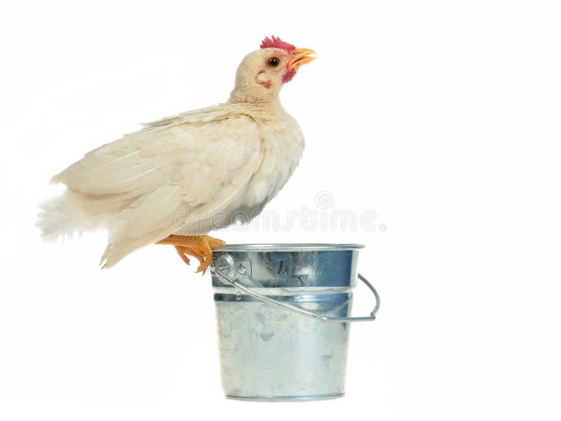 wiadra kurczaka target1323_0_ fotografia stock