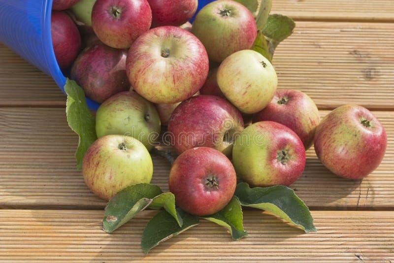 wiadro jabłka obraz stock
