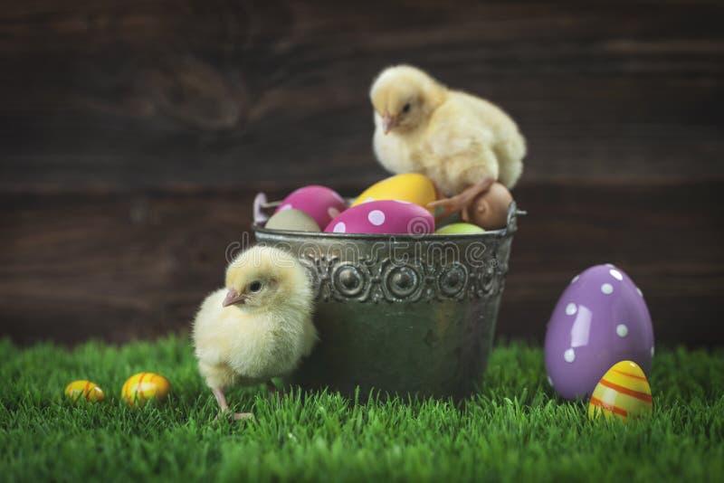 Wiadro pełno Easter kurczak i jajka obraz stock