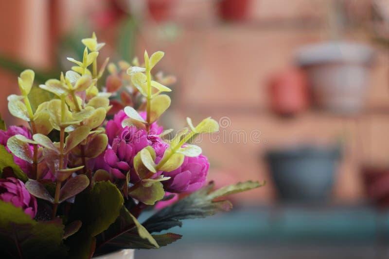 Wiadro piękny kwiat obrazy royalty free