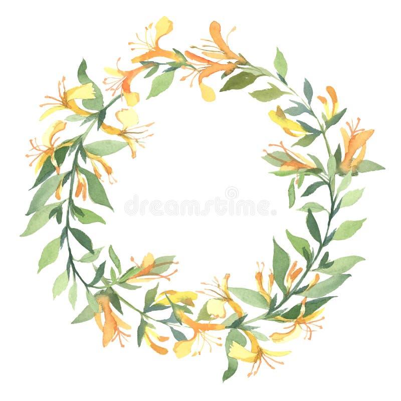 Wianek akwareli żółty Lonicera kwitnie na białym tle ilustracja wektor