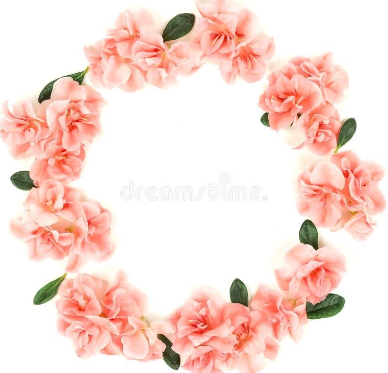 Wianek Kwitnie składu tło Menchia kwiatów azalii wzoru rama na białym tle zdjęcia stock