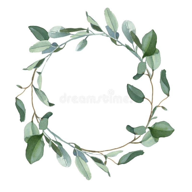 Wianek zieleni eucalypt liście odizolowywający na białym tle ilustracji