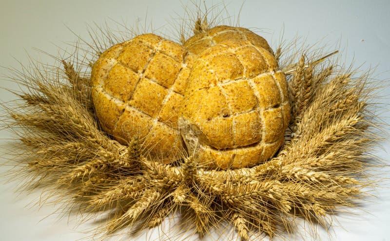 Wianek zrobi pszeniczni ucho w nim dwa świeżo piec chleb z ich swój rękami, złoci ucho ręki obrazy stock