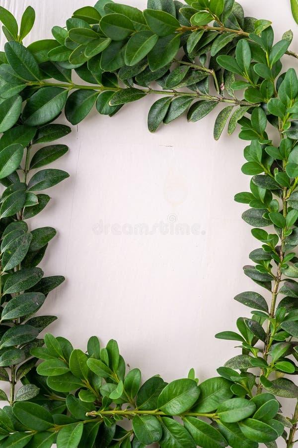 Wianku kwadrata rama Buxus sempervirens liścia liści zielonych gałąź tła kopii przestrzeni szablonu odgórnego widoku biały drewni obraz stock