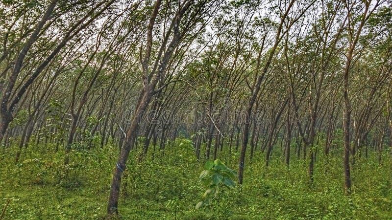Wiatrów Powyginani drzewa zdjęcia stock