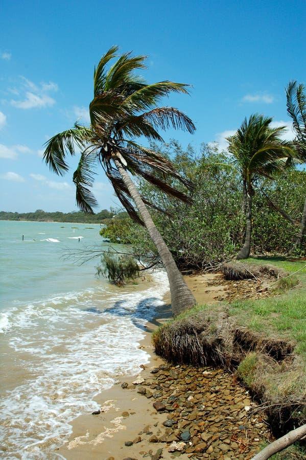 Download Wiatr morza zdjęcie stock. Obraz złożonej z seashore, palma - 42538
