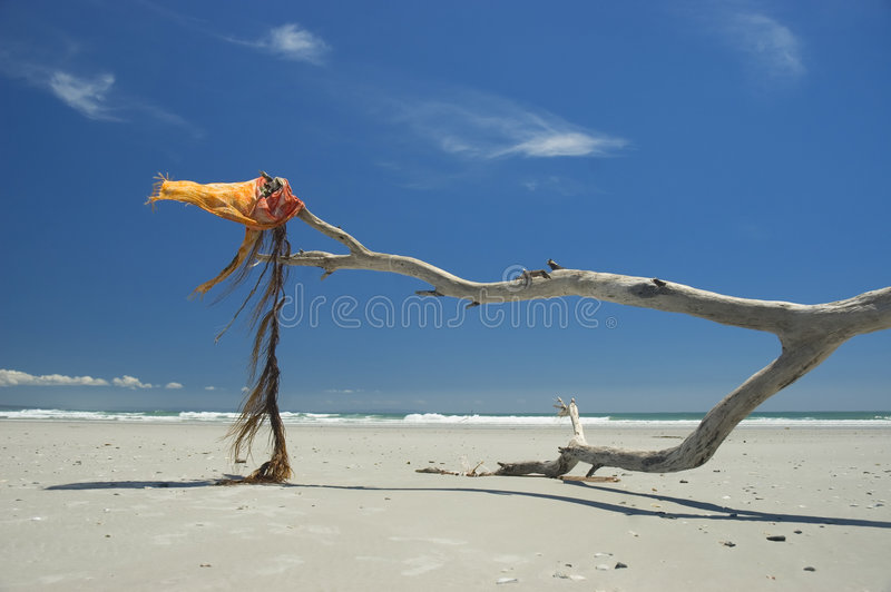 wiatr oceanu obraz royalty free