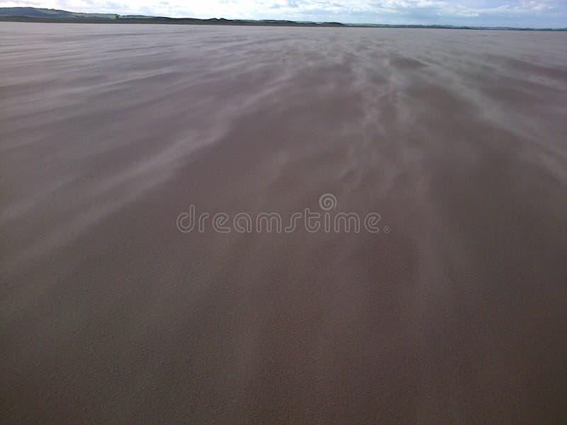 Wiatr zamiatająca piaskowata plaża obraz royalty free