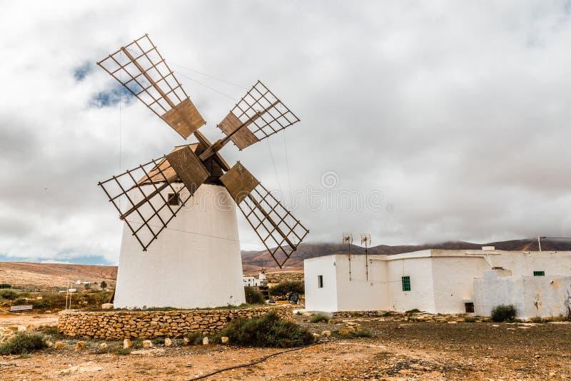 Wiatraczek - Fuerteventura, wyspy kanaryjska, Hiszpania zdjęcia royalty free