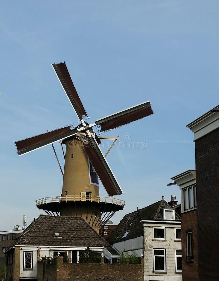 Wiatraczek w Holandia obraz royalty free