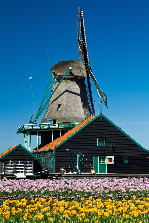 Wiatraczek w Holland obrazy stock
