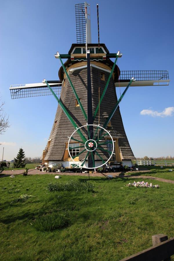 wiatrak niderlandzki obraz royalty free
