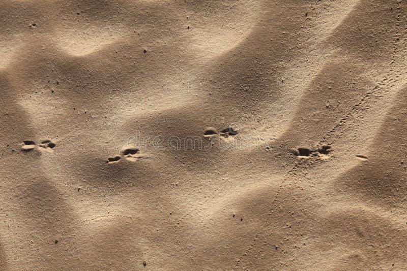 Wiatrowe tekstury na piasku zdjęcia stock
