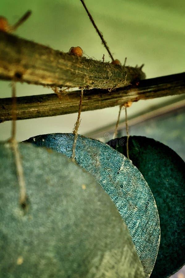 Wiatrowego Chime tapety tło obraz stock