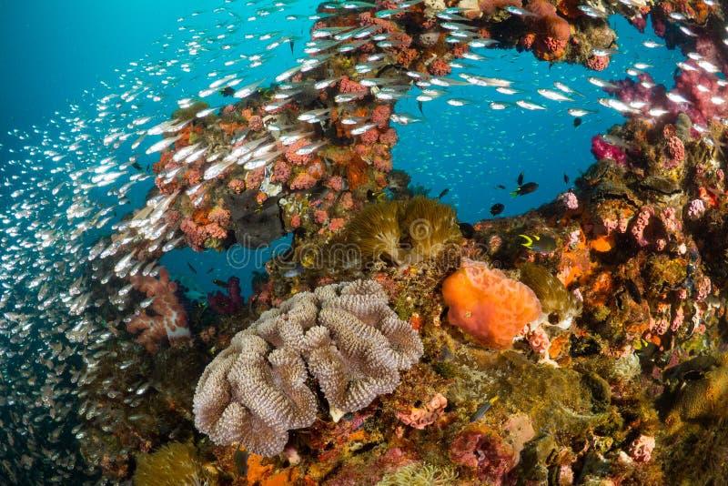 Wibrująca rafa koralowa przy Yongala Shipwreck zdjęcie stock