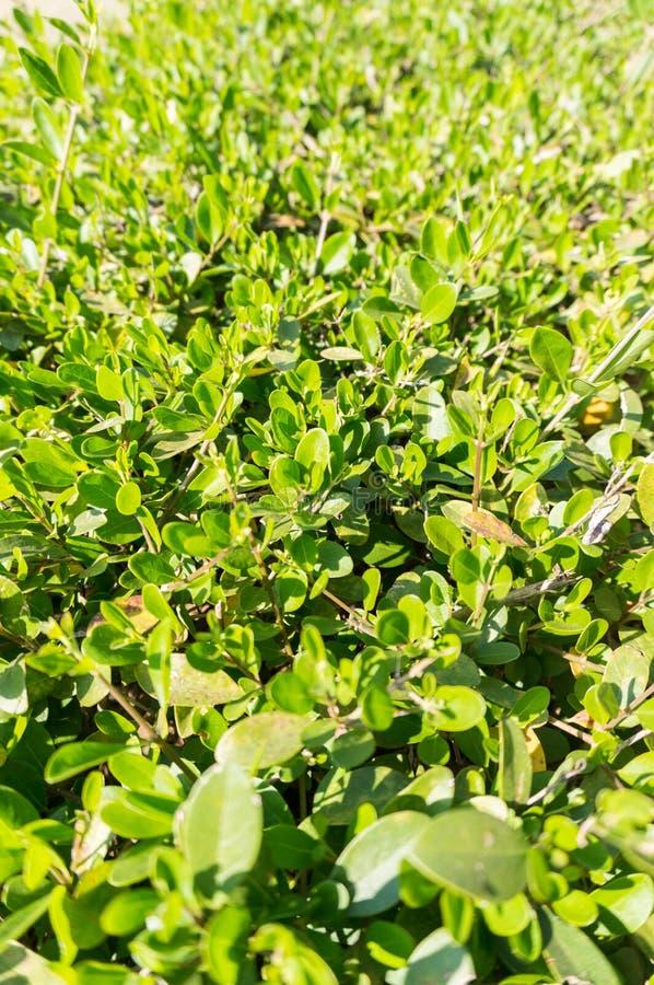 Wibrująca zieleń leafs zakończenie obraz stock