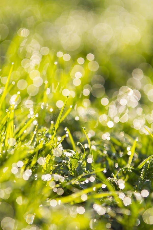 Wibrująca zielona trawa w górę, selekcyjna ostrość i piękny bokeh, zdjęcie stock