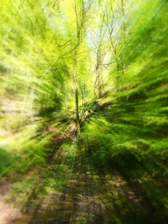 Wibrującej wiosny zieleni zoomu abstrakcjonistyczna plama lasów liście i drzewa obraz royalty free
