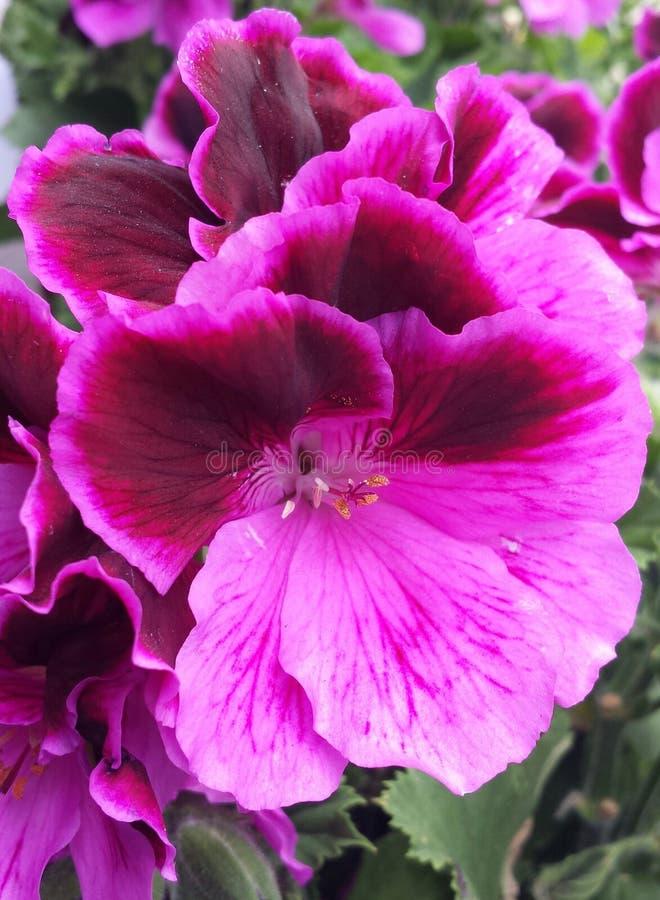 Wibrujący, żywi kwiaty, obrazy stock