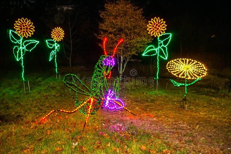 Wibrujący bożonarodzeniowe światła pasikonik i kwiaty obrazy stock