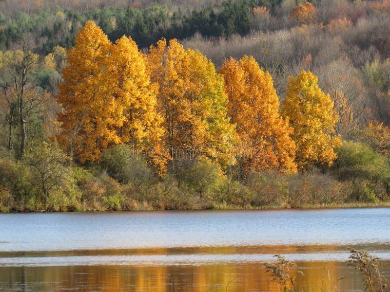 Wibrujący spadków drzewa przegapia jezioro obraz royalty free